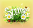 Spring comes up, vector background