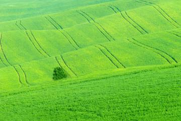 Tuscany Spring Landscape