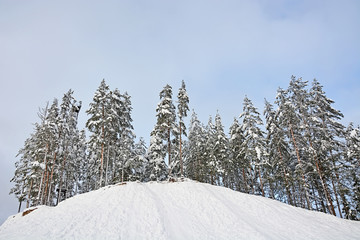 Winter forest on the snowy slope with blue sky background