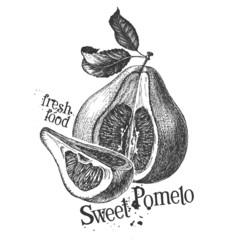 pomelo on white background. sketch