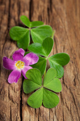 Three lucky irish clovers with its flower on a vintage wood back