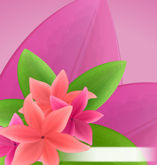 Illustration pink and red frangipani (plumeria), exotic flowers