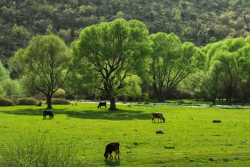 hayvancılık ve bahar