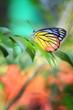 Butterfly - 81954341