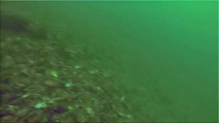 Whelk fishing under Bosphorus