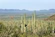 Leinwanddruck Bild - Landscapes Saguaro National Park, Arizona, USA