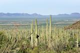 Landscapes Saguaro National Park, Arizona, USA