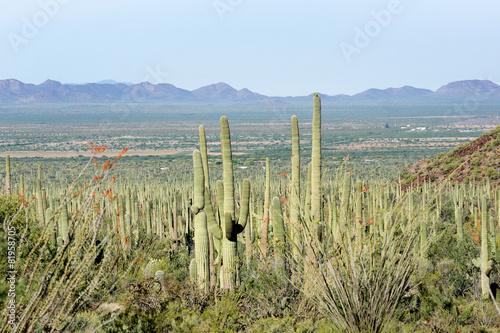 Leinwanddruck Bild Landscapes Saguaro National Park, Arizona, USA
