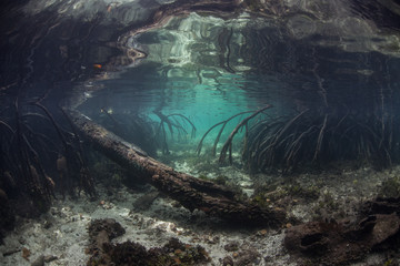 Mangrove Roots and Channel Underwater