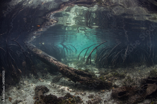 Fototapeta Mangrove Roots and Channel Underwater