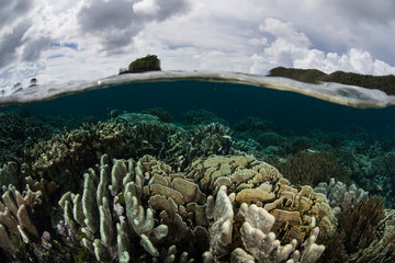 Healthy Reef in Shallows