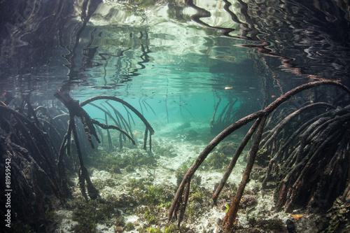 Mangrove Prop Roots Underwater - 81959542