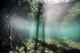 Shadows and Light in Mangrove