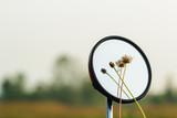 Flower grass  on a mirror
