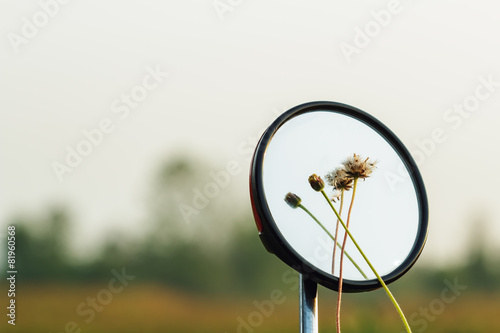 Leinwanddruck Bild Flower grass  on a mirror