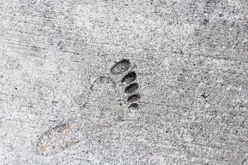 永遠の足跡
