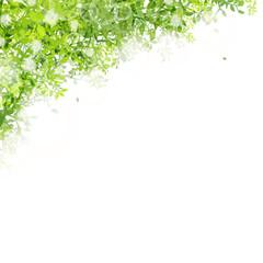 光りと緑の葉 シャボン玉