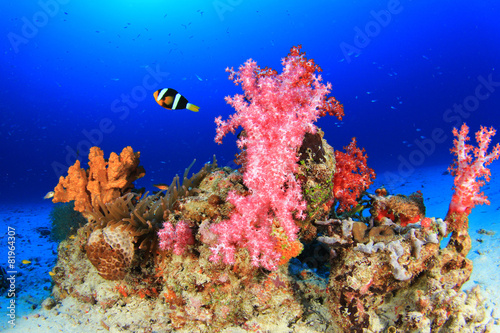 Coral and Clownfish and Anemone - 81964307