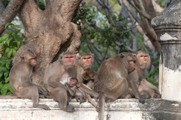 Monkeys Hang together