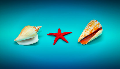 Seashells and red starfish on blue sea background