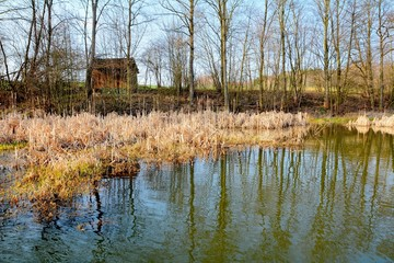 HDR shot of the natural wetland in pond.