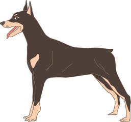 Dog Doberman Pinscher (Real)