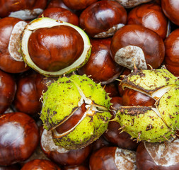 chestnuts  - autumnal still life