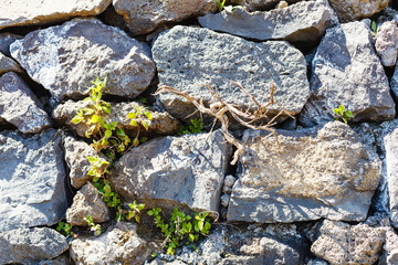 background from old cobblestone wall