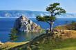 Tree of desires on Lake Baikal