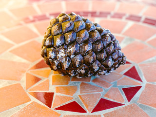 italian pine cone on stone table