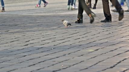 Closeup of observing pigeon between people's legs