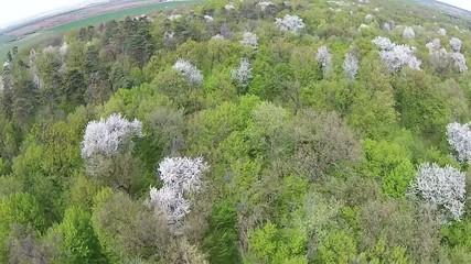 Spring forest aerial