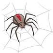 Spider Cartoon - 81975548