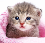 cute newborn kitten close up