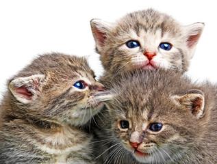 cute newborn kitten close up