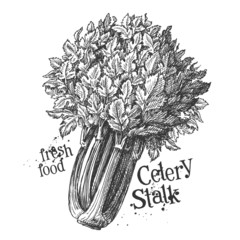 celery on a white background. sketch