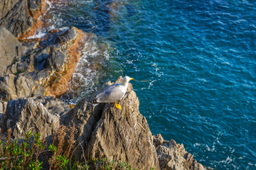 Seagull on the coast of Ligurian Sea, Italy