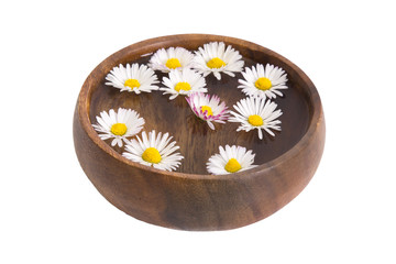 Bowl with daisies isolated