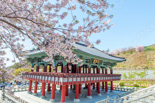 Papiers peints Autre Gyeongbokgung Palace with cherry blossom in spring,Korea