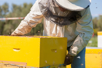 bee farmer with smoker on a hive