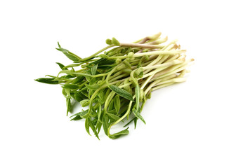 Chlorophylla green bean sprouts on white background