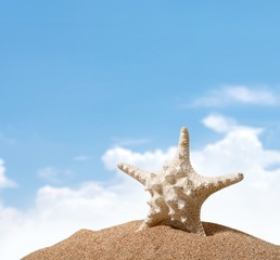 Beach. Starfish  with ocean , beach and seascape, shallow dof