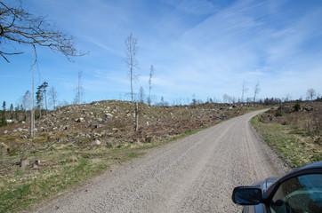 Driving through a clear cut forest