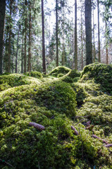 Ground level in a mossy forest