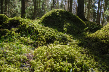 Mossy ground level