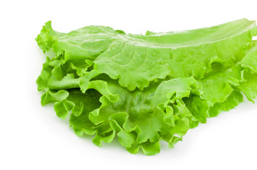 Leaves of green lettuce salad Isolated on white background