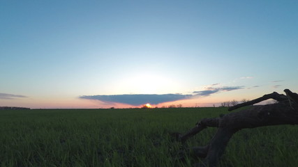 Sunset in the Green Field