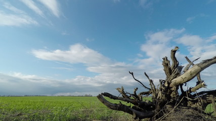 Root of a Tree and Clouds Sweep Over the Field
