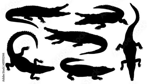 crocodile silhouettes - 81992144