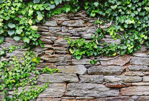 fototapeta na ścianę Steinmauer